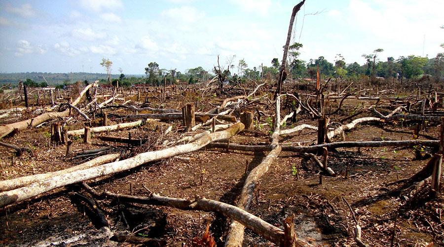 WEF研究表明:区块链可以帮助解决环境问题
